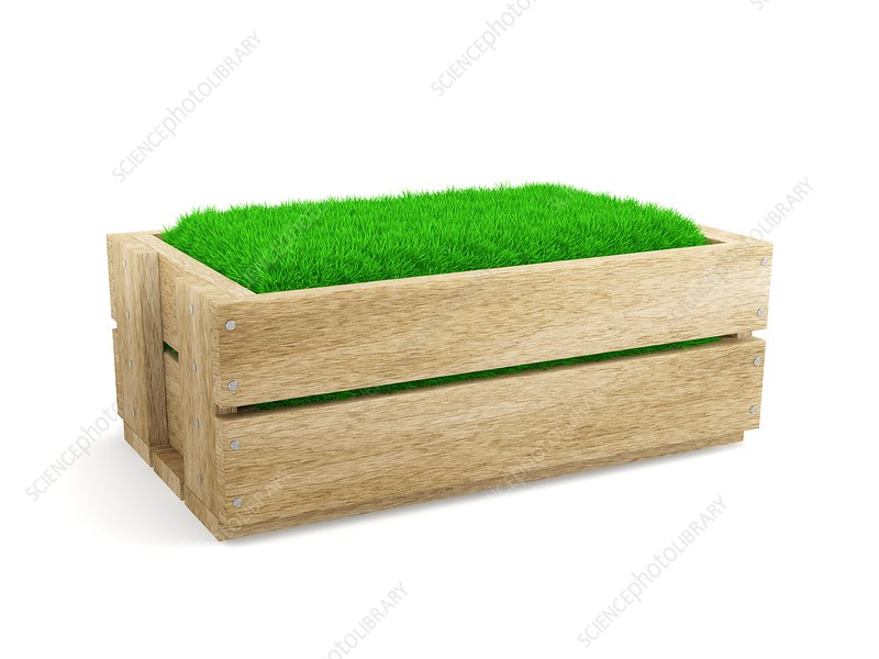 Wooden box filled with grass, illustration