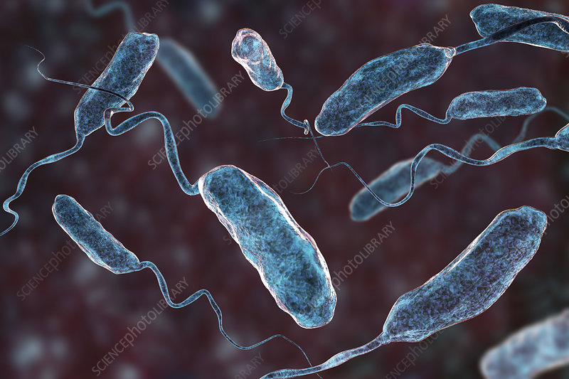 Cholera bacteria, illustration