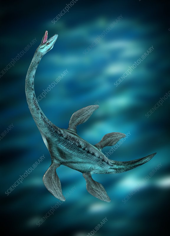 Underwater creature, illustration