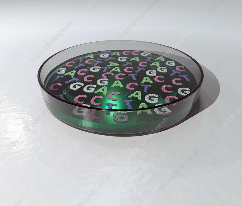 DNA letters in petri dish, illustration