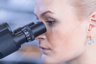 Scientist using microscope