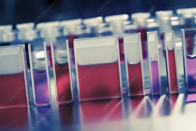 Quartz cuvettes containing red liquid