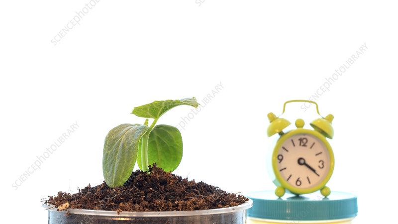 Plant and alarm clock