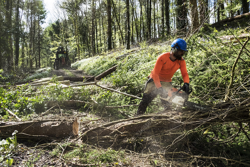 Man cutting tree trunk with chain saw