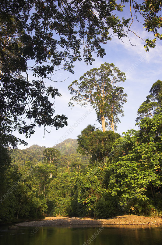 Lowland dipterocarp rainforest and river