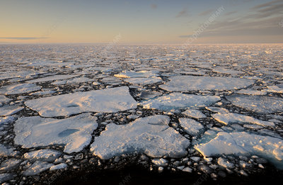 Broken pack ice floating on sea, Svalbard, Norway