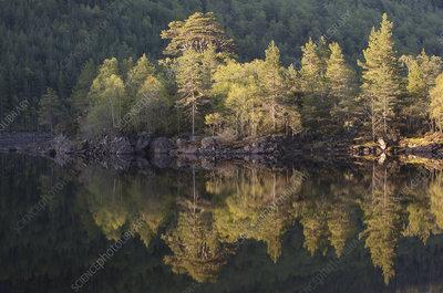 Dawn reflections in Loch Beinn at Mheadhoin, Scotland, UK