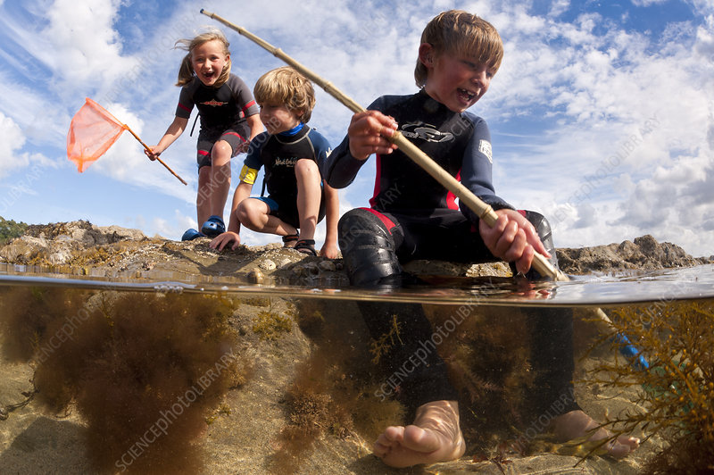 Children enjoying dipping in rockpools at low tide