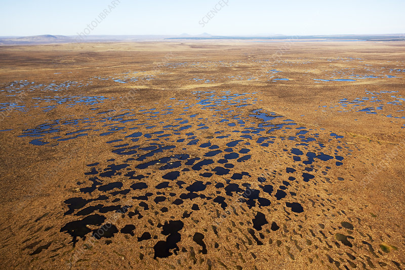 Aerial view across the Flow Country showing peatland pool