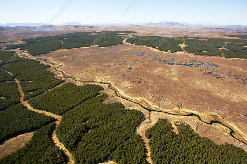 Aerial view of blocks of forestry plantation