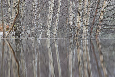 Woodland reflections in floodwaters