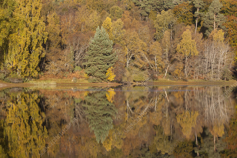 Trees reflecting in Loch Vaa, Cairngorms National Park, UK
