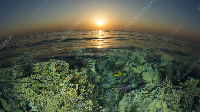 Fish eye view of sunset over coral reef
