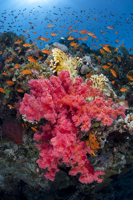 Colourful scene on coral reef