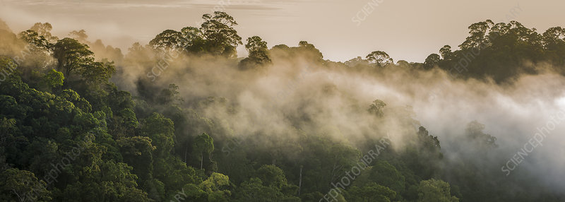 Early morning mist over the rainforest canopy