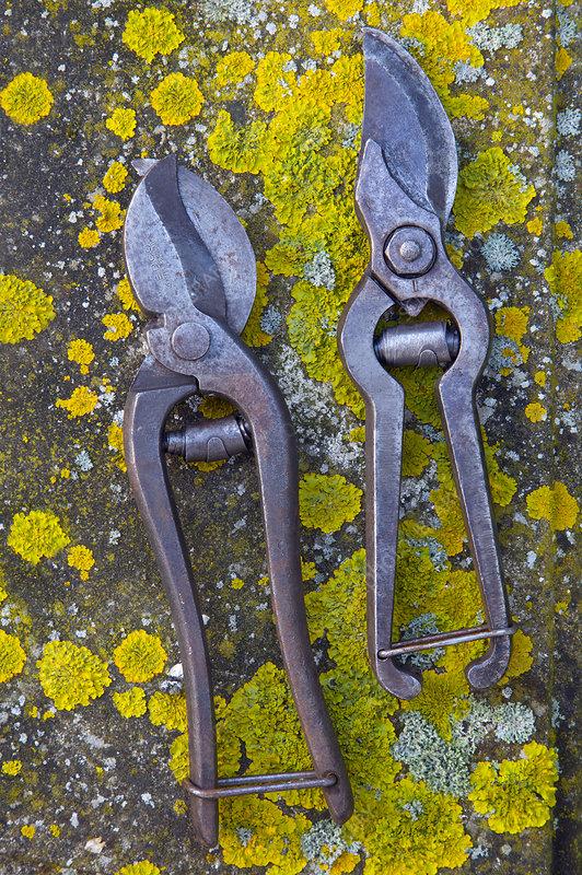 Old garden secateurs on lichen