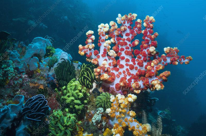 Soft coral feeding