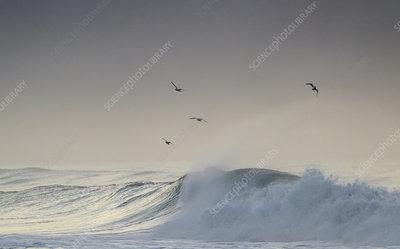 Large waves off the coast of south Iceland, Iceland