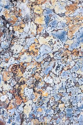 Lichens on rock, Torridon, Scotland, UK