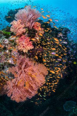A colourful reef scene
