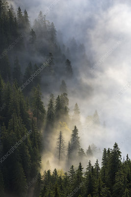 Foggy autumn landscape in the Piatra Mare Mountains, Romania