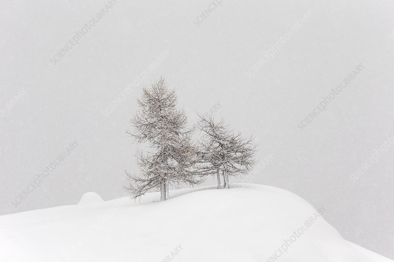 Alpine landscape with snow covered trees