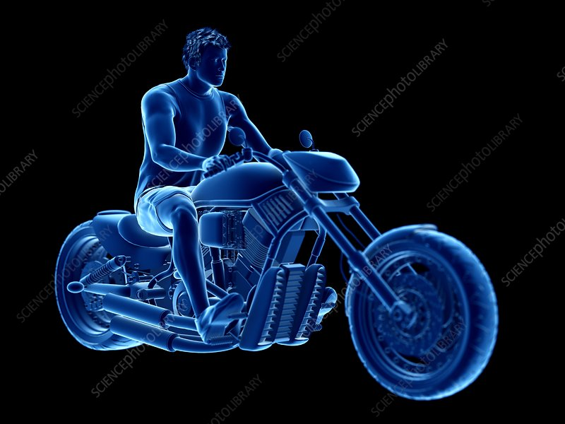 Illustration of a biker