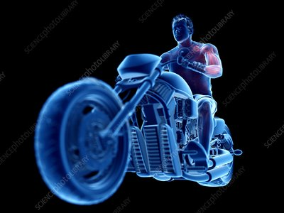 Illustration of a biker's muscles