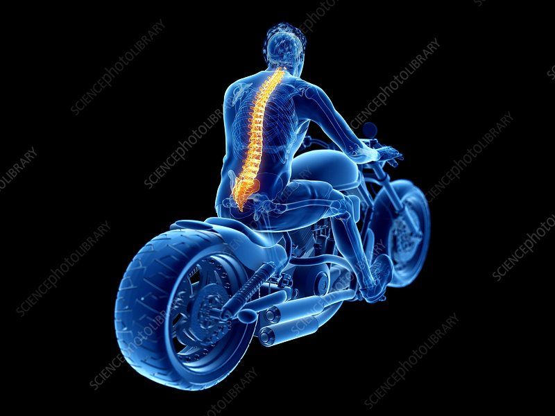 Illustration of a biker's spine