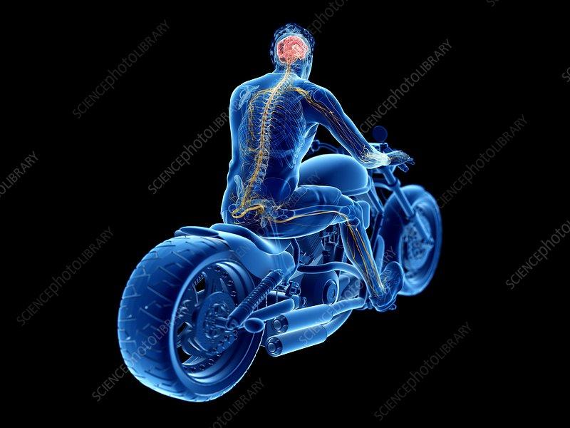 Illustration of a biker's brain