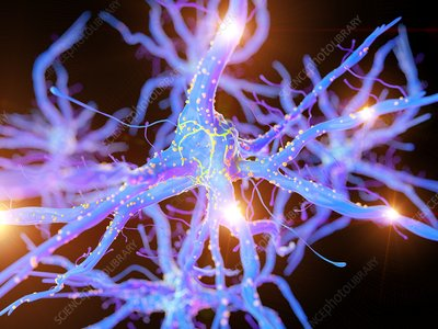 Illustration of an active nerve cell