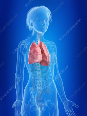 Illustration of a woman's lung
