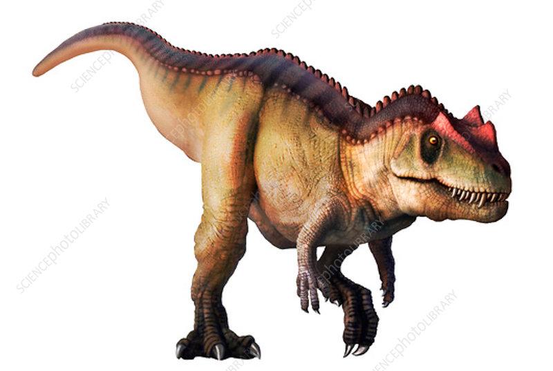 Ceratosaurus, illustration