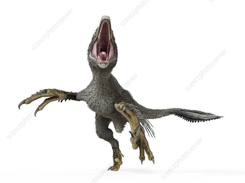 Illustration of a dakotaraptor