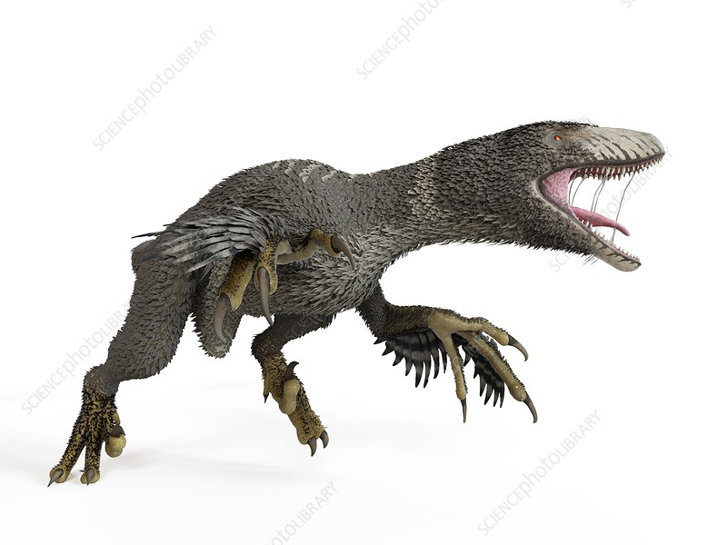 Illustration of a dakotaraptor