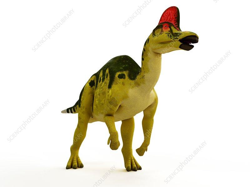 Illustration of a Hadro Corythosaurus