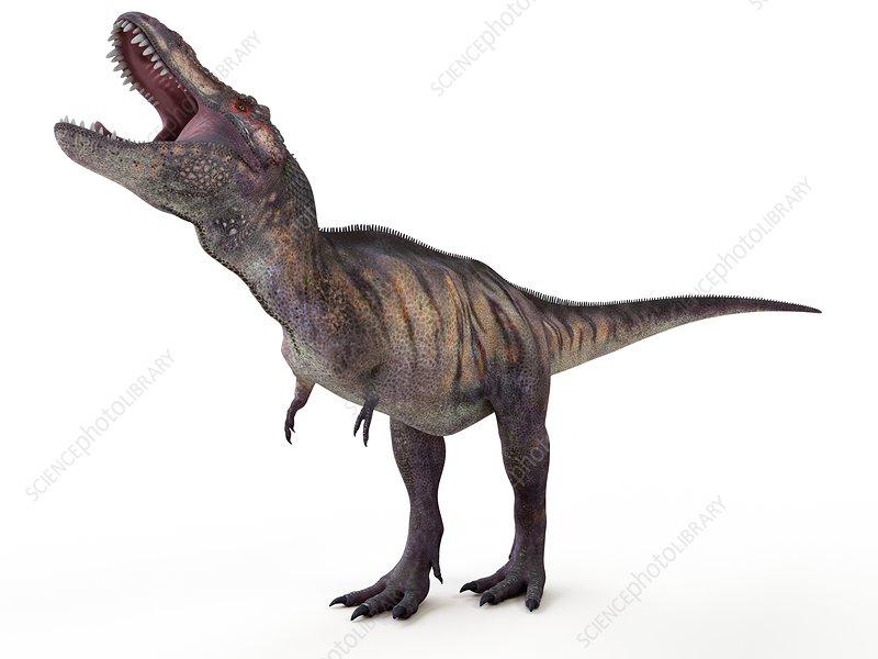 Illustration of a tyrannosaurus rex