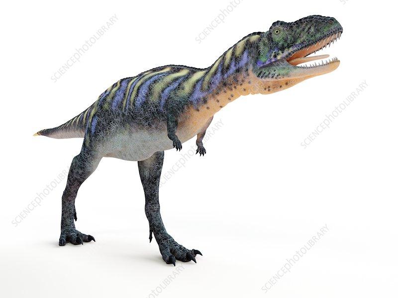 Illustration of a aucasaurus