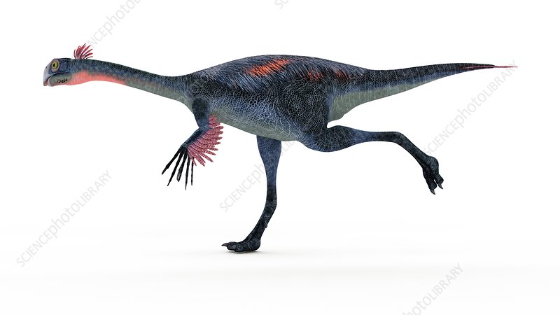 Illustration of a gigantoraptor