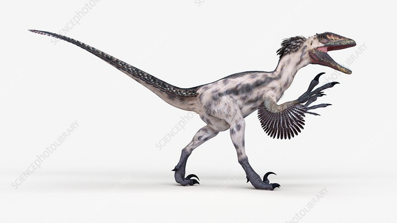 Illustration of a deinonychus