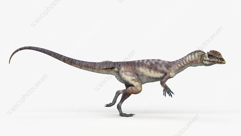 Illustration of a dilophosaurus