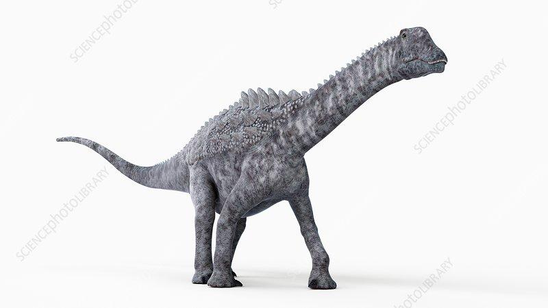 Illustration of a ampelosaurus