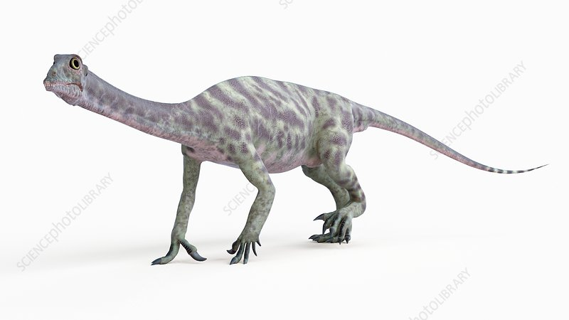 Illustration of a anchisaurus