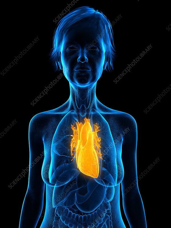 Illustration of an old woman's heart