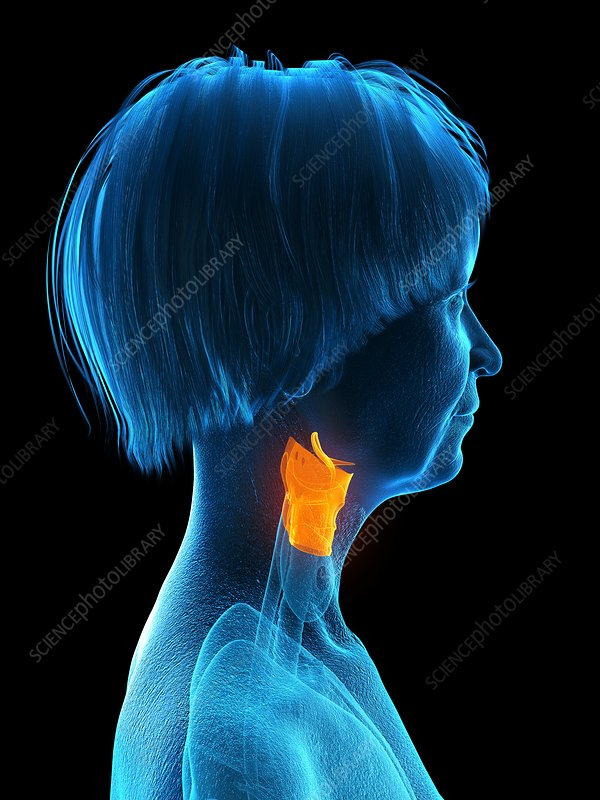 Illustration of an old woman's larynx