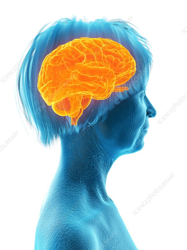 Illustration of an old woman's brain
