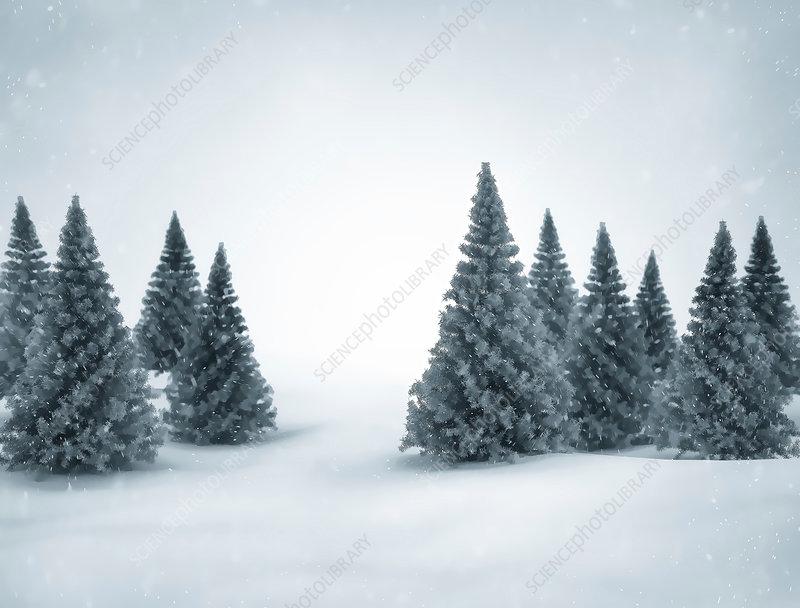 Winter landscape, illustration