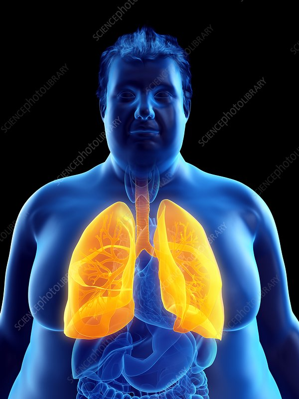 Illustration of an obese man's lungs