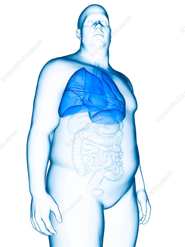 Illustration of an obese man's lung
