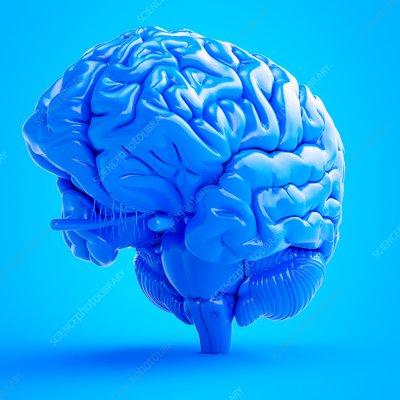 Illustration of a blue brain